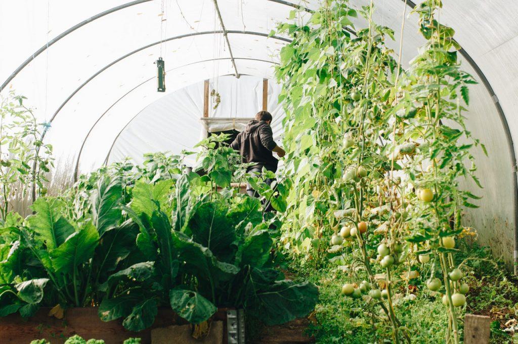 mindre växthus